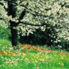 Время года Весна